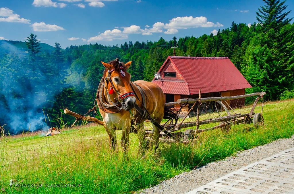 Koń na górskiej hali